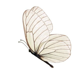 40372199 - white butterfly isolated on white background